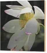 Lotus Under Cover Wood Print