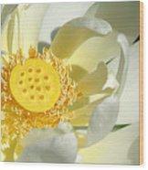 Lotus Up Close Wood Print