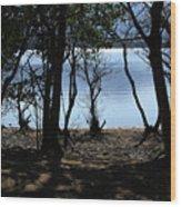 Lough Leane Through The Woods Wood Print