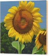 Louisa, Va. Sunflower 6 Wood Print