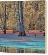 Louisiana Bayou Wood Print