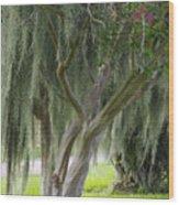 Louisiana Moodiness Wood Print