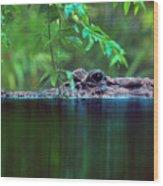 Louisiana Swimming Instructor  Wood Print