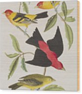 Louisiana Tanager Or Scarlet Tanager  Wood Print