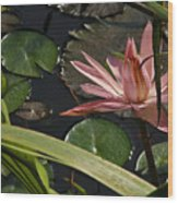 Louisiana Waterlilly Wood Print