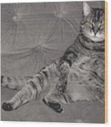 Lounge Cat Wood Print