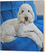Lounging Goldendoodle  Wood Print
