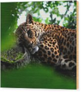 Lounging Leopard Wood Print