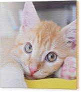 Lovable Cat Wood Print