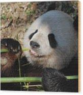 Lovable Giant Panda Bear With Big Paws Wood Print