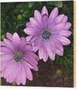 Love Daisies Wood Print