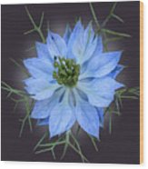 Love In A Mist Black With Light Wood Print