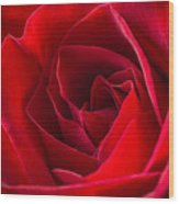 Love Is A Red Rose Wood Print
