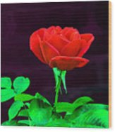 Love Is A Rose Wood Print