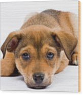 Love Me Puppy Wood Print