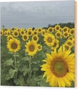 Love My Sunflowers Wood Print
