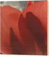 Love Of A Tulip Wood Print