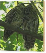 Love Owls Wood Print