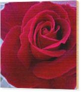 Love Red Rose Wood Print