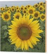 Love Sunflowers Wood Print