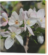 Lovely Apple Blossoms Wood Print