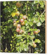 Lovely Apples On The Tree Wood Print