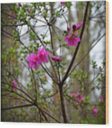 Lovely Bright Pink Flowers Wood Print