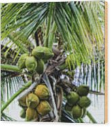 Lovely Bunch Of Coconuts Wood Print