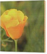 Lovely Buttercup Flower. Wood Print