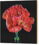 Lovely Carnation 12718-1 Wood Print