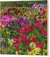 Lovely Dahlia Garden Wood Print