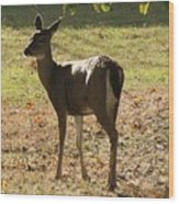 Lovely Deer Wood Print