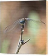 Lovely Dragonfly Wood Print