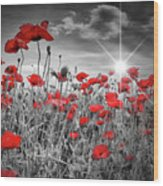 Lovely Field Of Poppies With Sun  Wood Print