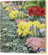 Lovely Flowers In Manito Park Conservatory Wood Print