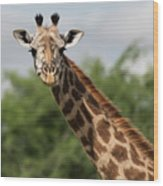 Lovely Giraffe In Tarangire - Square Format Wood Print