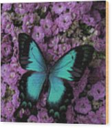 Lovely Green Winged Butterffly Wood Print