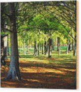 Lovely Grouping Of Trees In Mississippi Wood Print