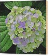 Lovely Hydrangea Wood Print