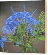 Lovely In Blue Wood Print