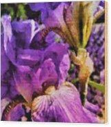 Lovely Iris Wood Print