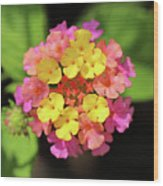 Lovely Lantana Wood Print