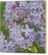 Lovely Lilacs Wood Print