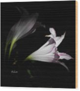 Lovely Lilies Dreams To Light Wood Print