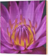 Lovely Lily II Wood Print