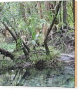 Lovely Lithia Springs Wood Print