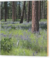 Lovely Lupine In The Mountains Wood Print