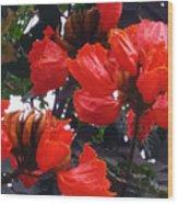 African Tulips Wood Print