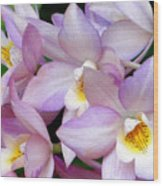 Lovely Orchid Family Wood Print