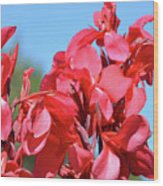 Lovely Pink Flowers  Wood Print
